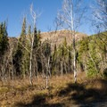 Aspens and fir near the Ponderosa Grove site.- Jordan Pines Group Campground