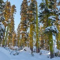 Winter colors on the Loch Leven Lakes Trail.- Loch Leven Lakes Snowshoe