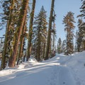 Fresh tracks on the Loch Leven Lakes Trail.- Loch Leven Lakes Snowshoe