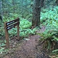 - Pacific Northwest National Scenic Trail Section 11