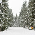 Option to take the road for easier travel.- June Lake Snowshoe