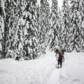 Snow covered trail to June Lake.- June Lake Snowshoe