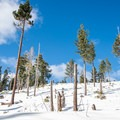 Views from the Red Trail at Sugar Pine Point State Park- Red Trail Snowshoe in Sugar Pine Point State Park