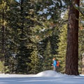 Snowshoers at Sugar Pine Point State Park.- Red Trail Snowshoe in Sugar Pine Point State Park