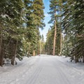 Red Trail at Sugar Pine Point State Park.- Red Trail Snowshoe in Sugar Pine Point State Park