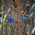 Blue diamond trail marker.- Blue Trail Snowshoe in Sugar Pine Point State Park