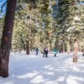 Blue Trail at Sugar Pine Point State Park.- Blue Trail Snowshoe in Sugar Pine Point State Park