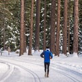 Jogger on the Blue Trail in Sugar Pine Point State Park.- Blue Trail Snowshoe in Sugar Pine Point State Park