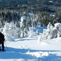 It's a short, steep, slope that leads back down to the forest.- Brown Mountain Snowshoe