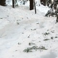 You can hardly find the Pacific Crest Trail under all the snow.- Brown Mountain Snowshoe
