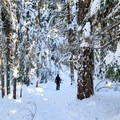 The trail to Tamawanas Falls is level and clear.- Tamanawas Falls Snowshoe