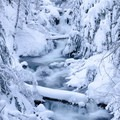 Cold Spring Creek in winter.- Tamanawas Falls Snowshoe