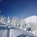 The skin tracks rise above the tree line.- Kwohl Butte Backcountry Ski