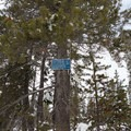 The warning sign that shows that you are on the right track.- Matrimony Tree Snowshoe