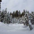 Deep powder in the area after the storm.- Matrimony Tree Snowshoe