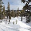 Fresh tracks on the ridge.- Matrimony Tree Snowshoe