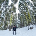 Snowshoeing on the trail to the Matrimony Tree.- Matrimony Tree Snowshoe