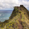 The saddle is much scarier when you look back toward where you climbed up.- Pu'u Manamana Turnover Trail