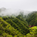 Misty low-lying clouds roll in dozens of times a day.- Pu'u Manamana Turnover Trail