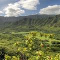 The view headed northwest toward Kahana Valley.- Pu'u Manamana Turnover Trail