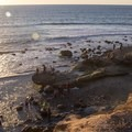Tide pool access.- Cabrillo National Monument