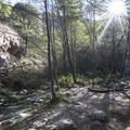 Eaton Canyon Falls Trail.- Eaton Canyon Falls Hike