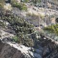 Chaparral vegetation high above Eaton Canyon.- Eaton Canyon Falls Hike