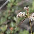 Unidentified species (help us identify it by providing feedback).- Eaton Canyon Falls Hike