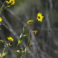 Unidentified species (help us identify it by providing feedback).- Eaton Canyon Natural Area + Nature Center