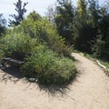 Eaton Canyon Natural Area and Nature Center.- Eaton Canyon Natural Area + Nature Center