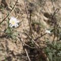 Unidentified species (help us identify it by providing feedback).- Echo Mountain Hike via Sam Merrill Trail
