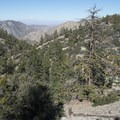 View of the northern slope of the San Gabriel Mountains from the Angeles Crest Highway.- Angeles Crest Highway