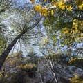 Gabrielino Trail along Arroyo Seco en route to Switzer Falls.- Switzer Falls Hike via Gabrielino Trail