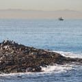 View south of Santa Catalina Island from White Point - Royal Palms Beach Park.- White Point - Royal Palms Beach Park