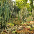 Desert Garden at Huntington Gardens.- Huntington Botanical Gardens