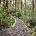 Valley Trail.- Heceta Head Trail