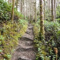 Heceta Head Trail.- Heceta Head Trail