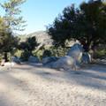 Walk-in campsites at Chilao Campground, Manzanita Loop.- Chilao Campground, Manzanita Loop