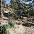 Chilao Interpretive Trail.- Chilao Visitor Center + Interpretive Trail