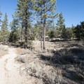 Silver Moccasin Trail outside of Horse Flats Campground.- Silver Moccasin Trail Hike via Upper Chilao Trailhead