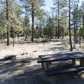 Typical campsite at Horse Flats Campground.- Horse Flats Campground