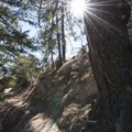 Douglas firs (Pseudotsuga menziesii) along the Devils Canyon Trail.- Devils Canyon Trail Hike