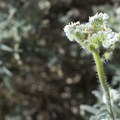 Unidentified species (help us identify it by providing feedback) along the Devils Canyon Trail.- Devils Canyon Trail Hike