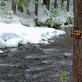 Salt Creek in the Willamette National Forest.- Salt Creek Falls + Diamond Creek Falls Snowshoe