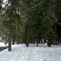 Snowshoeing trail along Salt Creek.- Salt Creek Falls + Diamond Creek Falls Snowshoe