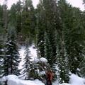 Enjoying the beauty of the snow covered Willamette National Forest.- Salt Creek Falls + Diamond Creek Falls Snowshoe