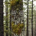 Moss clings to anyting and everything.- Horse Creek South Trail Hike