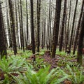 Eyes on the forest, not on the trees. - Horse Creek South Trail Hike