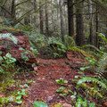 There are several nice features to pass through along the trail.- Horse Creek South Trail Hike