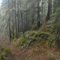 Exposure increases toward the end of the trail.- Horse Creek South Trail Hike